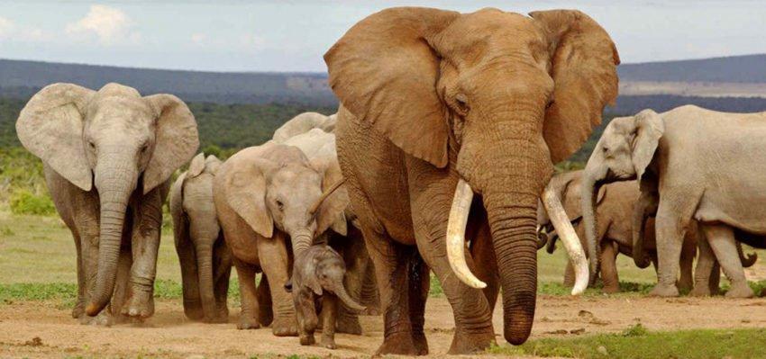 Descubre El Significado Del Elefante En El Feng Shui Wemystic