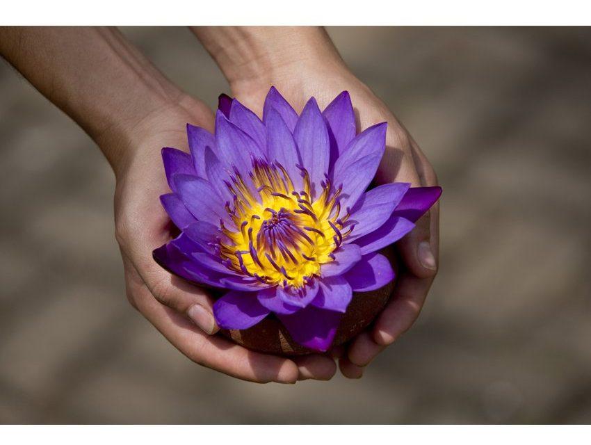 Flor De Loto Descubre Los Beneficios Y Propiedades Wemystic