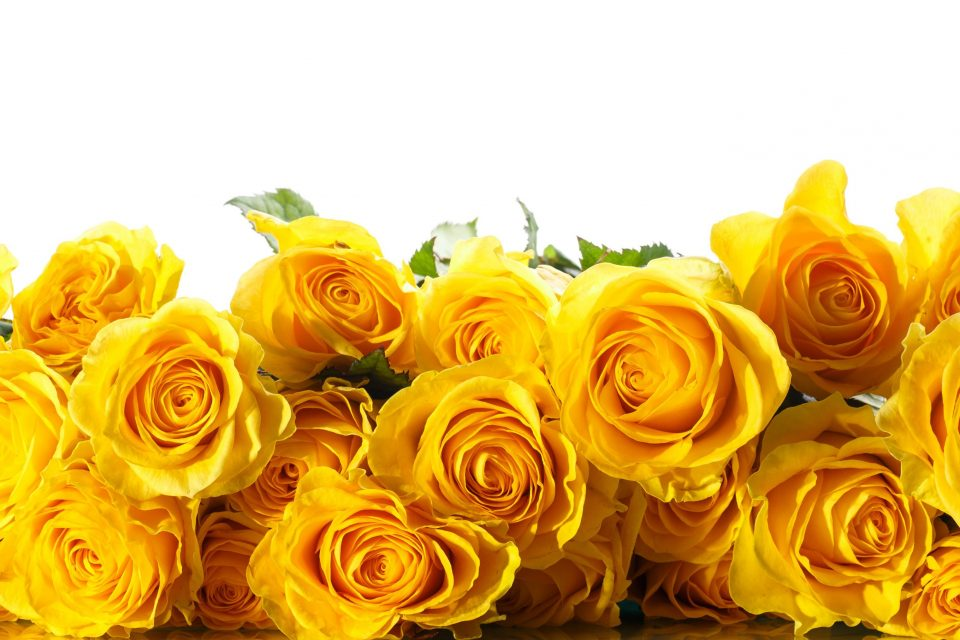 Ritual De La Rosa Amarilla Para Atraer Prosperidad Wemystic
