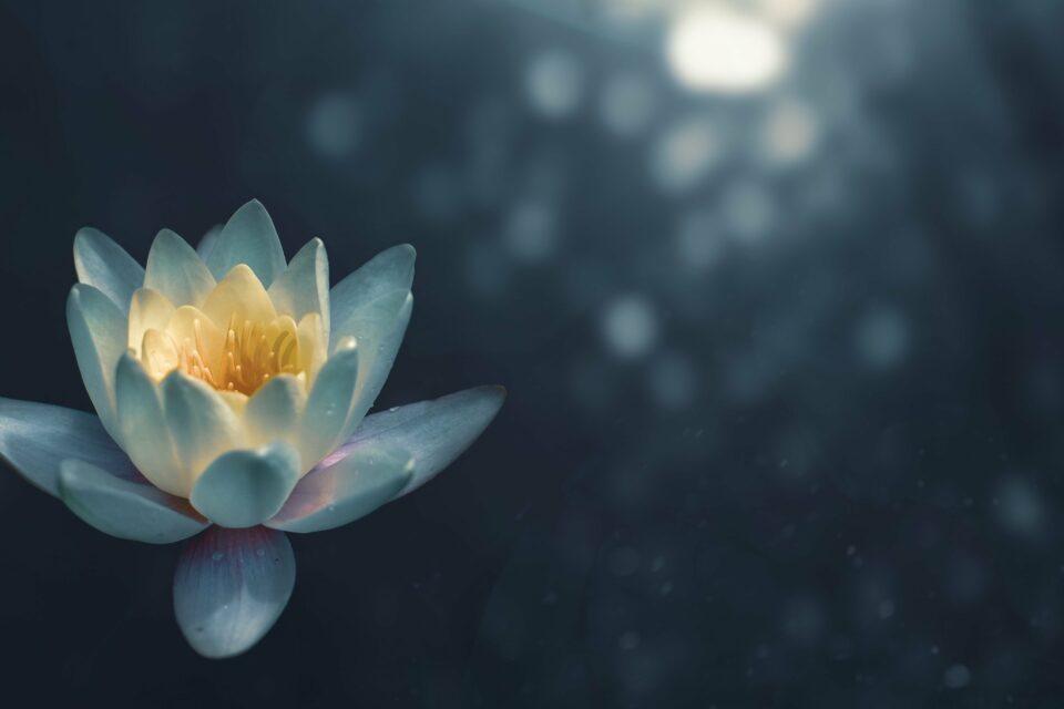 white lotus tarot leo 2020